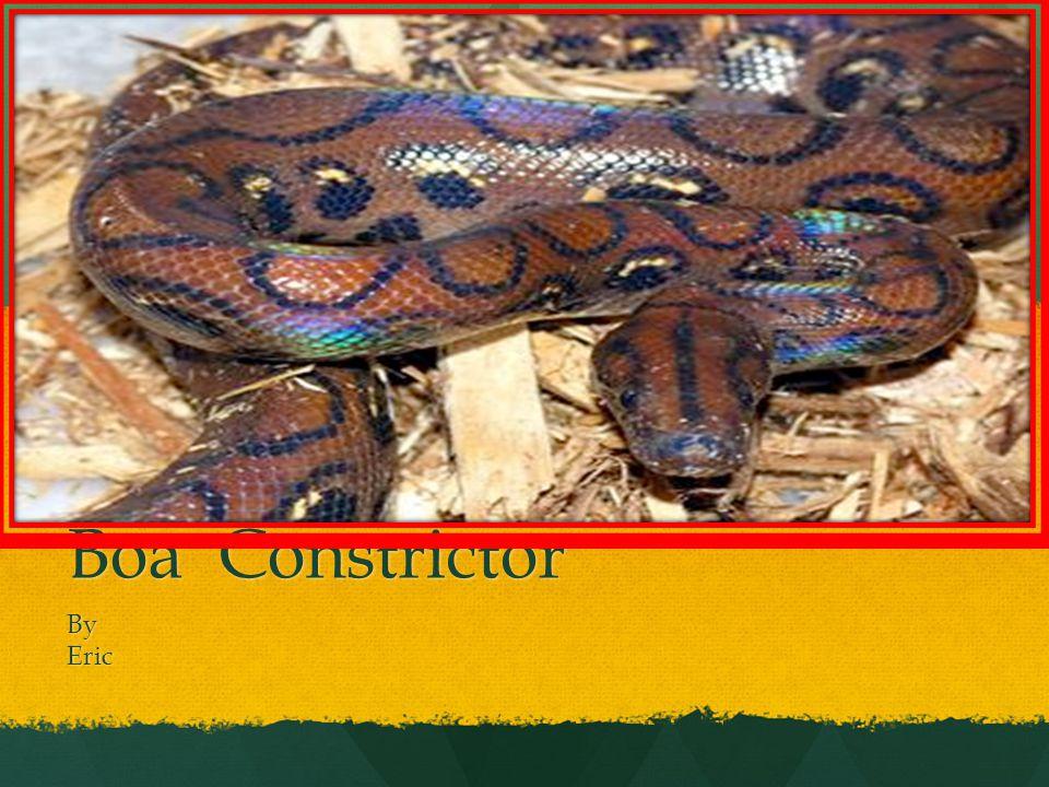 Boa Constrictor ByEric