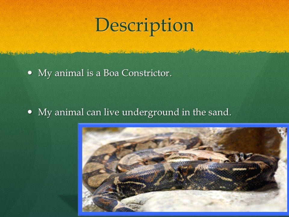 Description My animal is a Boa Constrictor.My animal is a Boa Constrictor.