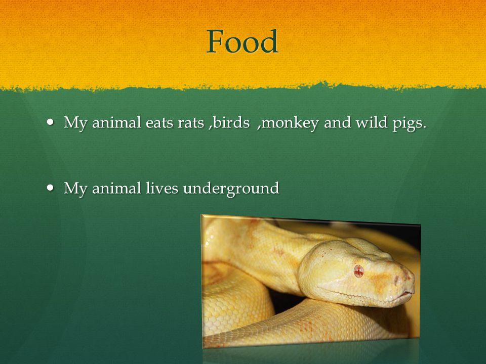Food My animal eats rats,birds,monkey and wild pigs.