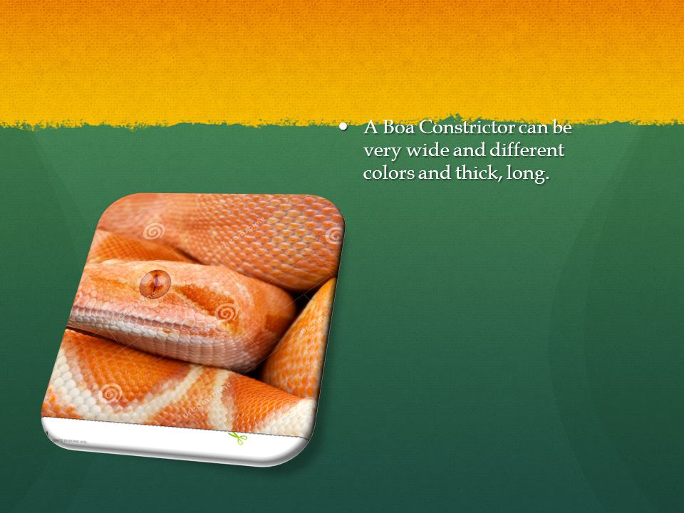 A Boa Constrictor can be very wide and different colors and thick, long.
