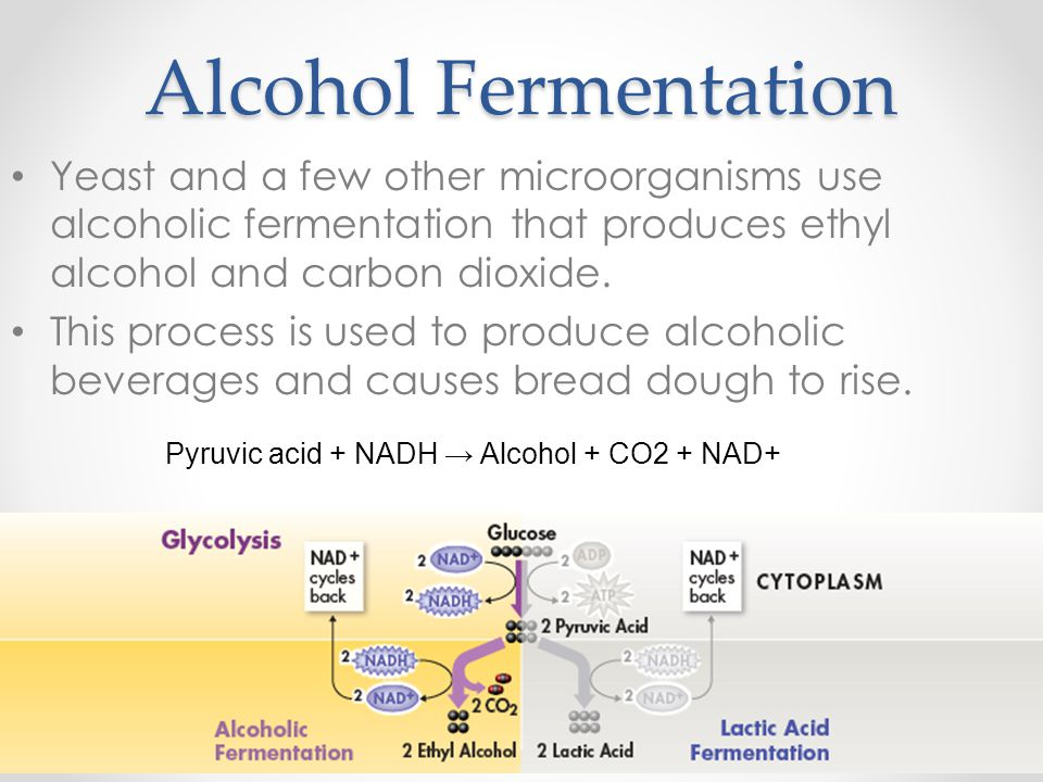 Alcohol Fermentation Yeast and a few other microorganisms use alcoholic fermentation that produces ethyl alcohol and carbon dioxide. This process is u