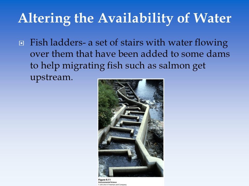  Fish ladders- a set of stairs with water flowing over them that have been added to some dams to help migrating fish such as salmon get upstream. Alt