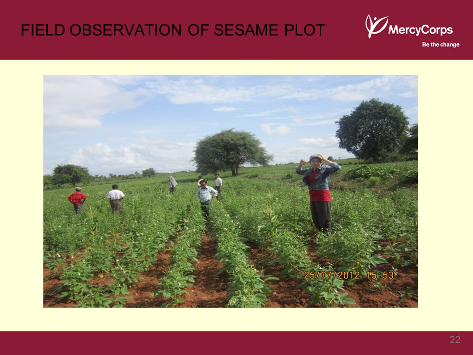 FIELD OBSERVATION OF SESAME PLOT 22