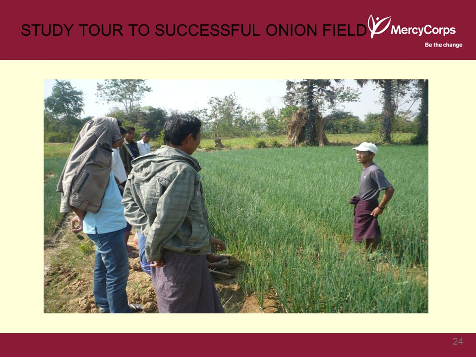 STUDY TOUR TO SUCCESSFUL ONION FIELD 24
