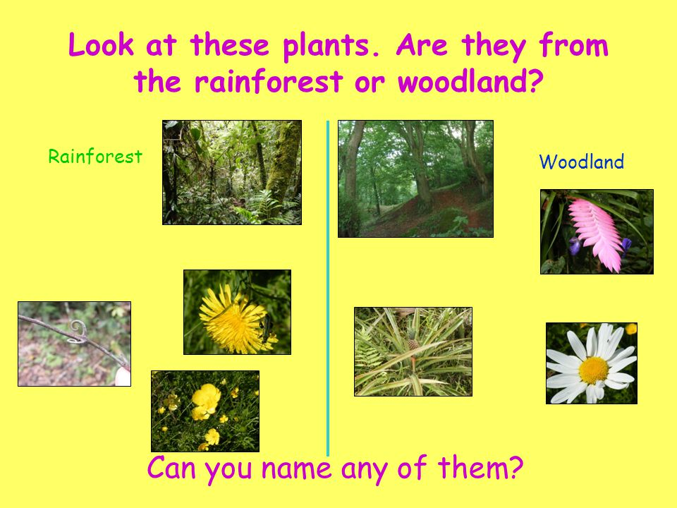 Rainforest Woodland Drag the animals to their correct habitat Where do we live?