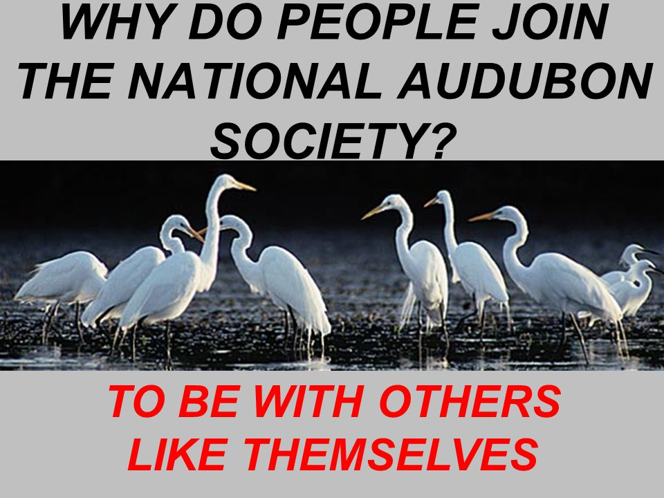 WHY DO PEOPLE JOIN THE NATIONAL AUDUBON SOCIETY TO BE WITH OTHERS LIKE THEMSELVES