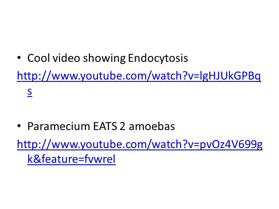 Cool video showing Endocytosis http://www.youtube.com/watch?v=lgHJUkGPBq s Paramecium EATS 2 amoebas http://www.youtube.com/watch?v=pvOz4V699g k&feature=fvwrel