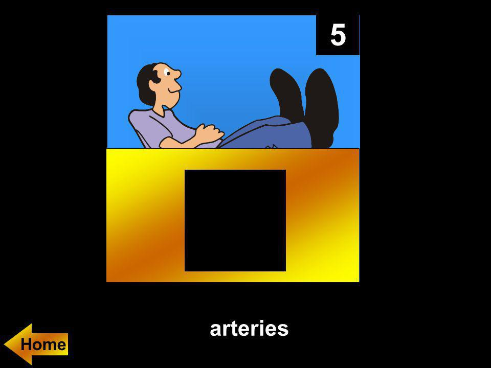 5 arteries