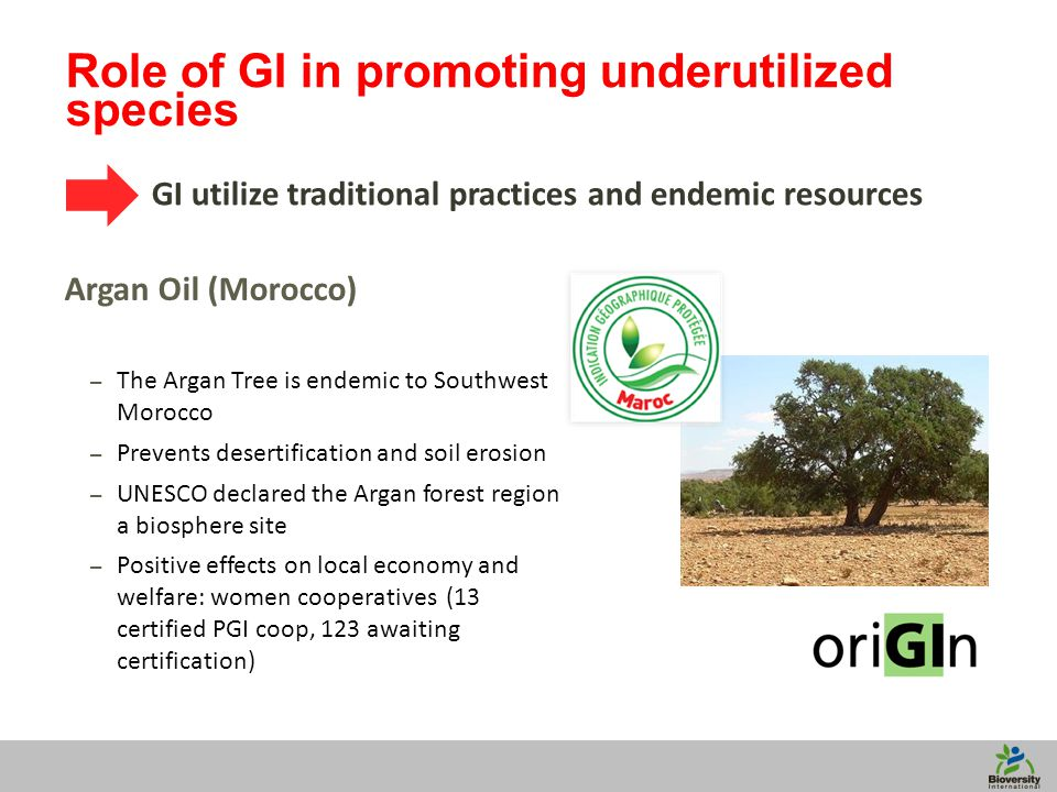 10 Role of GI in promoting underutilized species GI utilize traditional practices and endemic resources Argan Oil (Morocco) – The Argan Tree is endemic to Southwest Morocco – Prevents desertification and soil erosion – UNESCO declared the Argan forest region a biosphere site – Positive effects on local economy and welfare: women cooperatives (13 certified PGI coop, 123 awaiting certification)