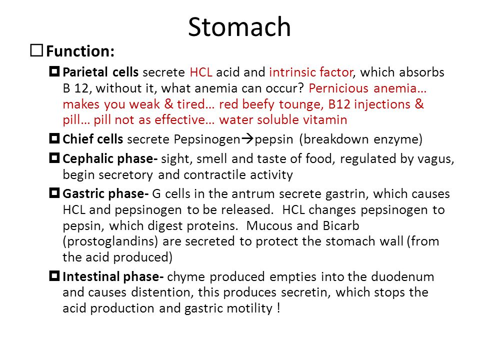 Stomach  Function:  Parietal cells secrete HCL acid and intrinsic factor, which absorbs B 12, without it, what anemia can occur? Pernicious anemia…