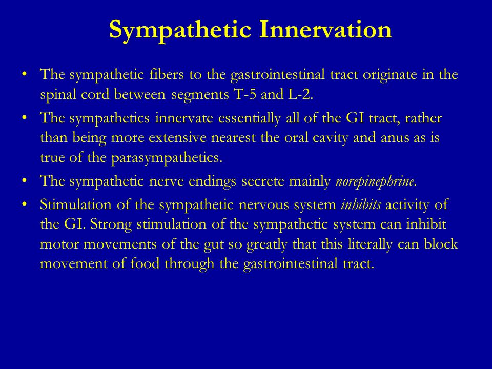 Sympathetic Innervation The sympathetic fibers to the gastrointestinal tract originate in the spinal cord between segments T-5 and L-2. The sympatheti