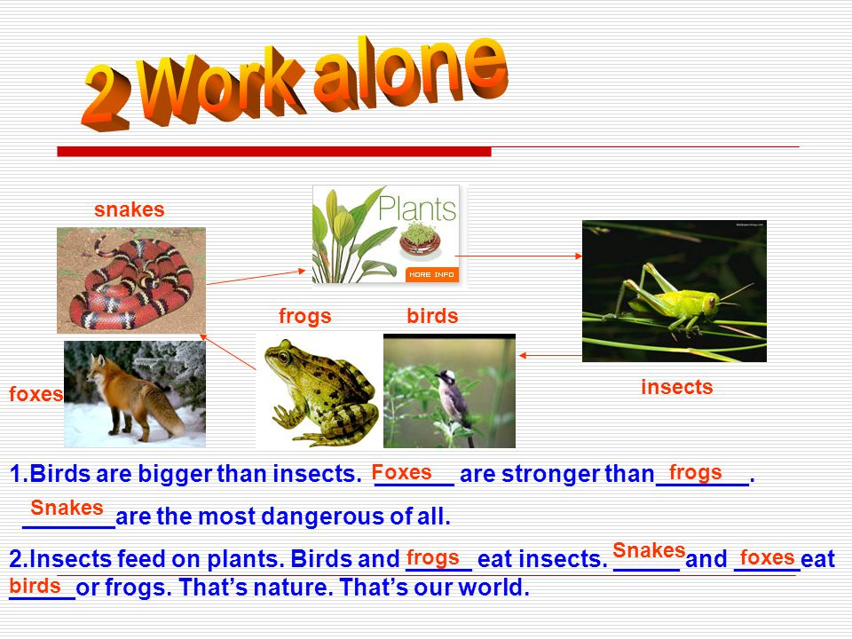 A: Which kind of animal/plant do you like best,… …or….