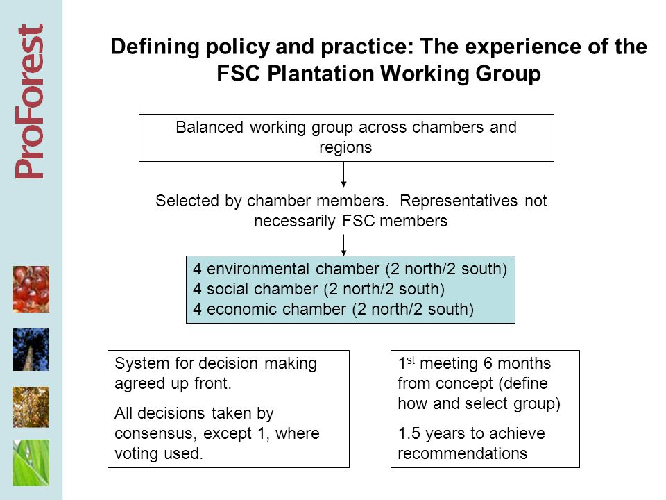 Defining policy and practice: The experience of the FSC Plantation Working Group 4 environmental chamber (2 north/2 south) 4 social chamber (2 north/2 south) 4 economic chamber (2 north/2 south) Balanced working group across chambers and regions Selected by chamber members.