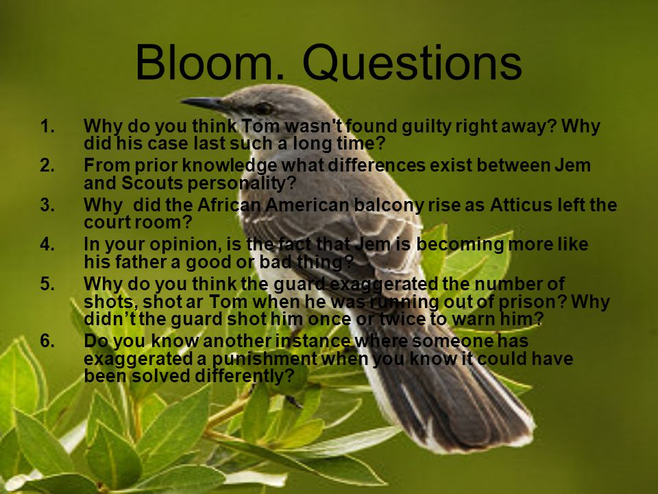 Bloom. Questions 1.Why do you think Tom wasn t found guilty right away.