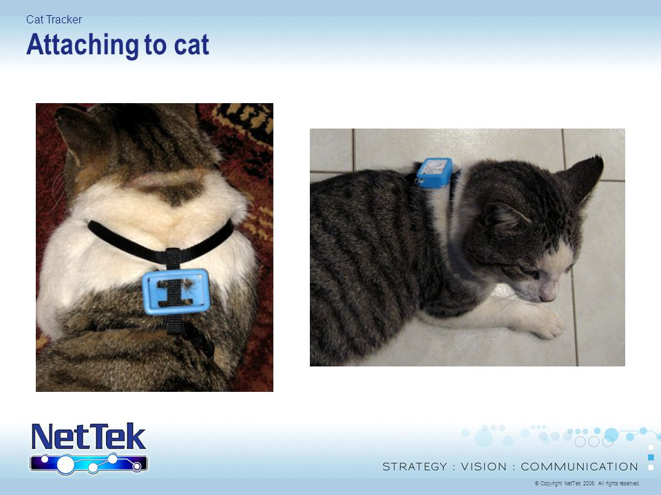 © Copyright NetTek All rights reserved. Cat Tracker Attaching to cat