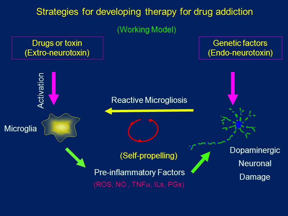 Strategies for developing therapy for drug addiction Pre-inflammatory Factors (ROS, NO., TNF , ILs, PGs) Reactive Microgliosis (Self-propelling) Drugs or toxin (Extro-neurotoxin) Activation Genetic factors (Endo-neurotoxin) Microglia (Working Model) Dopaminergic Neuronal Damage