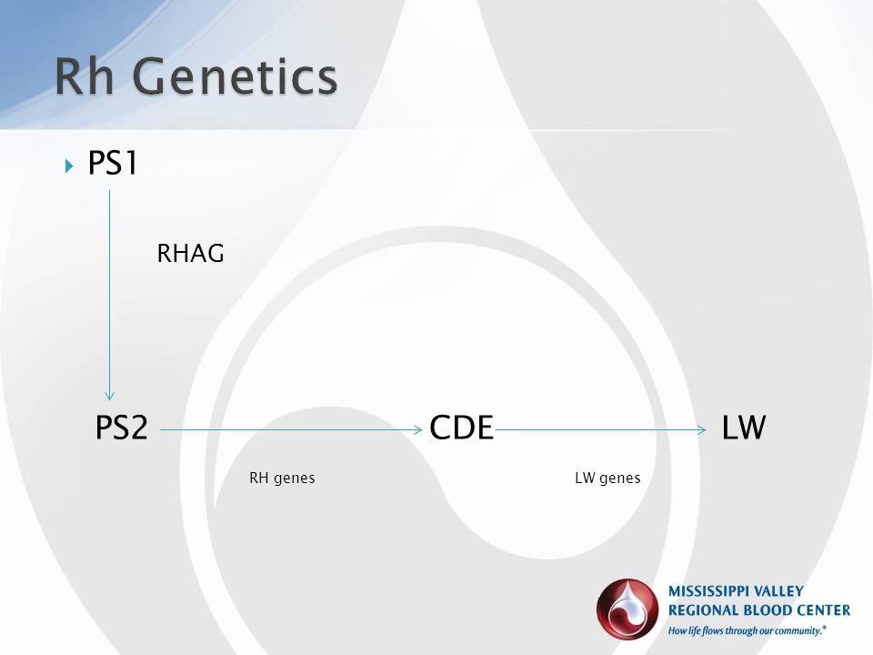  PS1 RHAG PS2 CDE LW RH genes LW genes