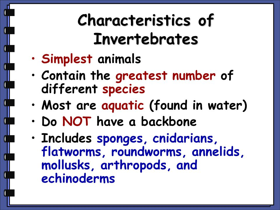 Characteristics of Invertebrates Simplest animals Contain the greatest number of different species Most are aquatic (found in water) Do NOT have a bac