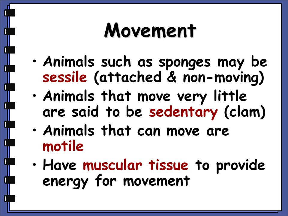 Movement Animals such as sponges may be sessile (attached & non-moving) Animals that move very little are said to be sedentary (clam) Animals that can