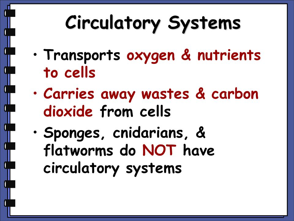 Circulatory Systems Transports oxygen & nutrients to cells Carries away wastes & carbon dioxide from cells Sponges, cnidarians, & flatworms do NOT hav