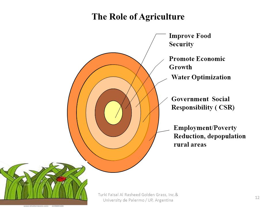 Improve Food Security Promote Economic Growth Water Optimization Government Social Responsibility ( CSR) Employment/Poverty Reduction, depopulation rural areas 12 The Role of Agriculture Turki Faisal Al Rasheed Golden Grass, Inc.& University de Palermo / UP, Argentina