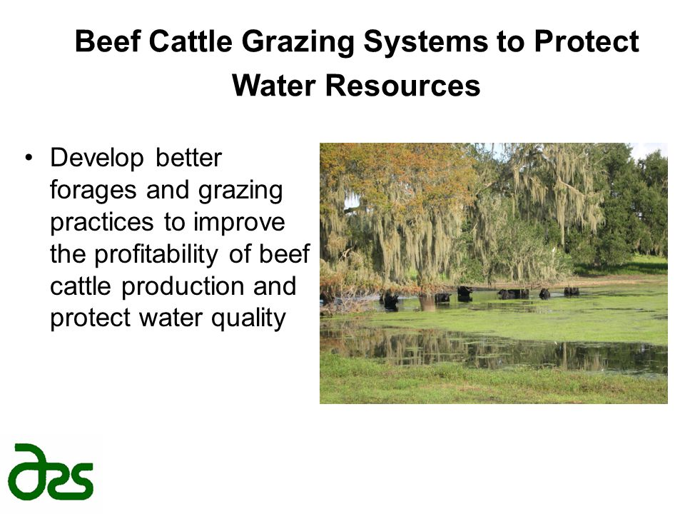 Beef Cattle Grazing Systems to Protect Water Resources Develop better forages and grazing practices to improve the profitability of beef cattle produc
