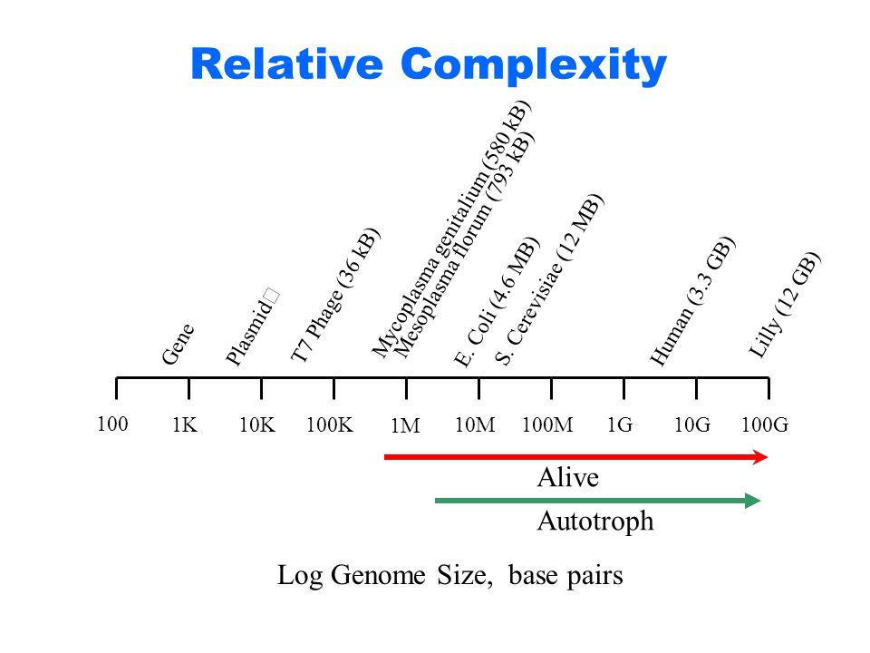 Relative Complexity 100 1K10K100K 1M 10M100M1G10G100G Gene Plasmid Mycoplasma genitalium (580 kB) Mesoplasma florum (793 kB) E. Coli (4.6 MB) S. Cerev