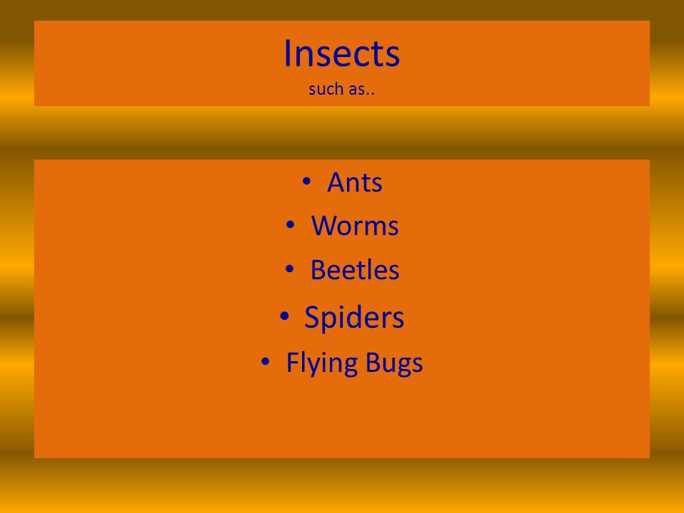 Insects such as.. Ants Worms Beetles Spiders Flying Bugs