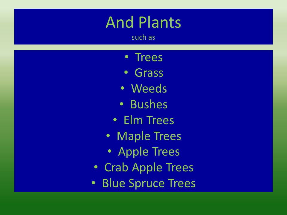 And Plants such as Trees Grass Weeds Bushes Elm Trees Maple Trees Apple Trees Crab Apple Trees Blue Spruce Trees