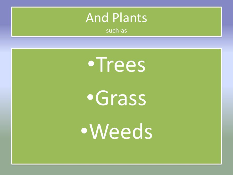 And Plants such as Trees Grass Weeds Trees Grass Weeds