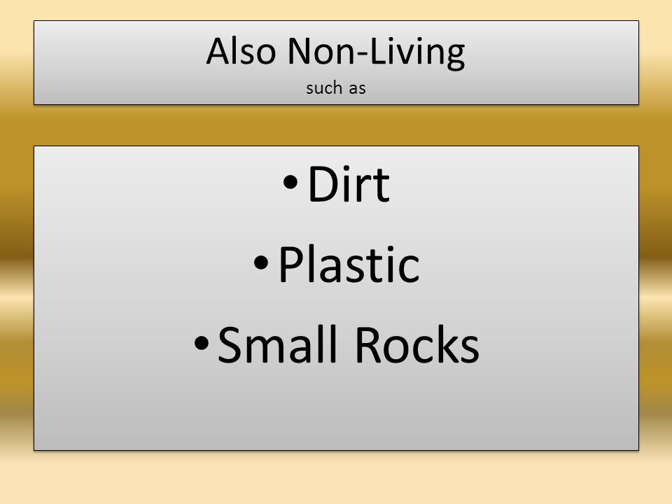 Also Non-Living such as Dirt Plastic Small Rocks Dirt Plastic Small Rocks