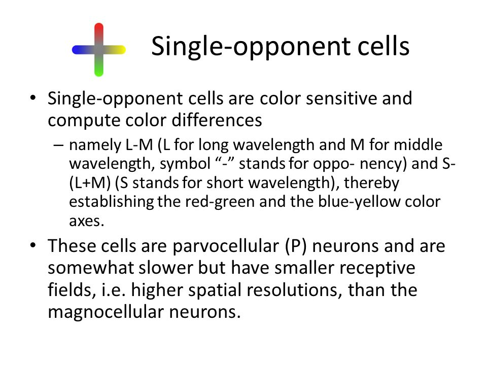 Single-opponent cells Single-opponent cells are color sensitive and compute color differences – namely L-M (L for long wavelength and M for middle wavelength, symbol - stands for oppo- nency) and S- (L+M) (S stands for short wavelength), thereby establishing the red-green and the blue-yellow color axes.