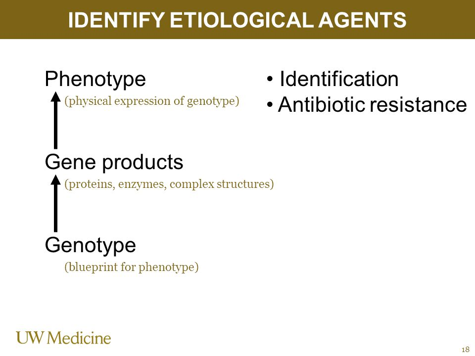 IDENTIFY ETIOLOGICAL AGENTS 18 Phenotype Gene products Genotype (physical expression of genotype) Identification Antibiotic resistance (proteins, enzymes, complex structures) (blueprint for phenotype)