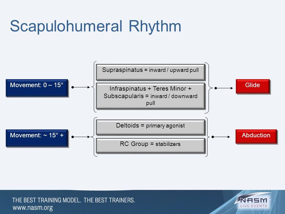 Movement: 0 – 15° Supraspinatus = inward / upward pull Infraspinatus + Teres Minor + Subscapularis = inward / downward pull Glide Movement: ~ 15° + De