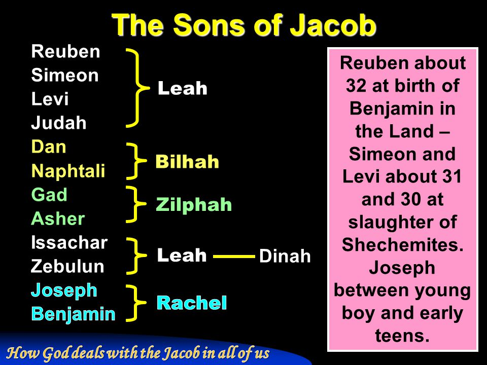 The Sons of Jacob Leah Bilhah Zilphah Dinah Reuben about 32 at birth of Benjamin in the Land – Simeon and Levi about 31 and 30 at slaughter of Shechem
