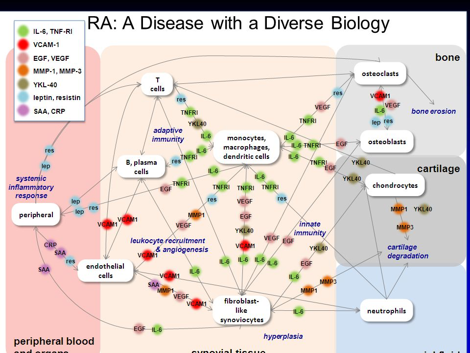 Overview Methods for ACR 2011 Guideline Development Highlights from 2011 ACR Guidelines Update Safety –Infections –GI Perforations –CV Events Biomarker-Based Assessment of RA Disease Activity