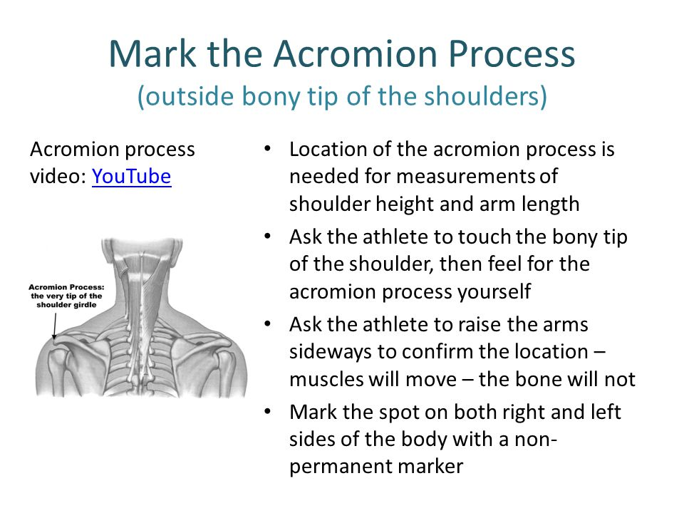 Mark the Acromion Process (outside bony tip of the shoulders) Location of the acromion process is needed for measurements of shoulder height and arm l