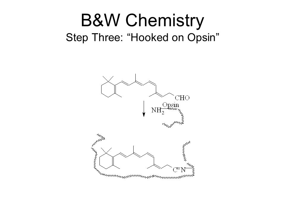 "B&W Chemistry Step Three: ""Hooked on Opsin"""
