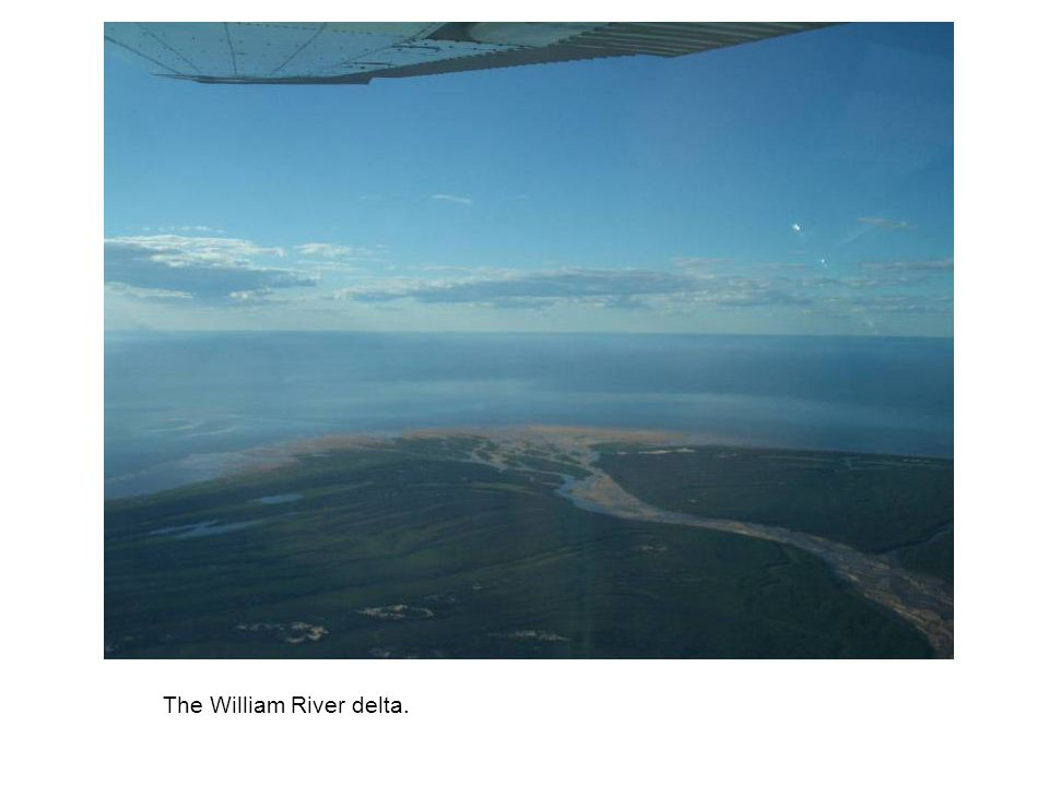 The William River delta.