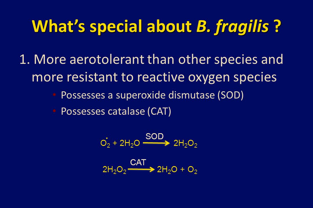 What's special about B. fragilis ? 1. More aerotolerant than other species and more resistant to reactive oxygen species Possesses a superoxide dismut