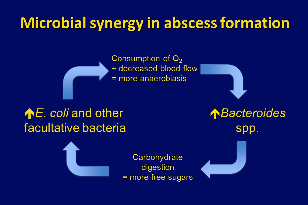Microbial synergy in abscess formation  Bacteroides spp.  E. coli and other facultative bacteria Carbohydrate digestion = more free sugars Consumpti