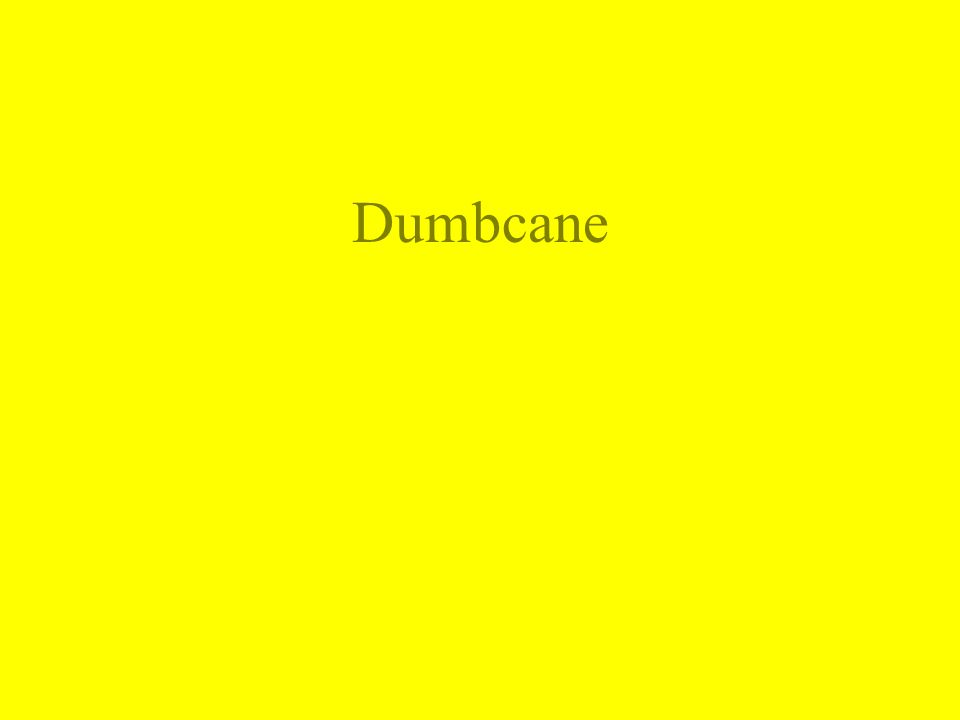 Dumbcane