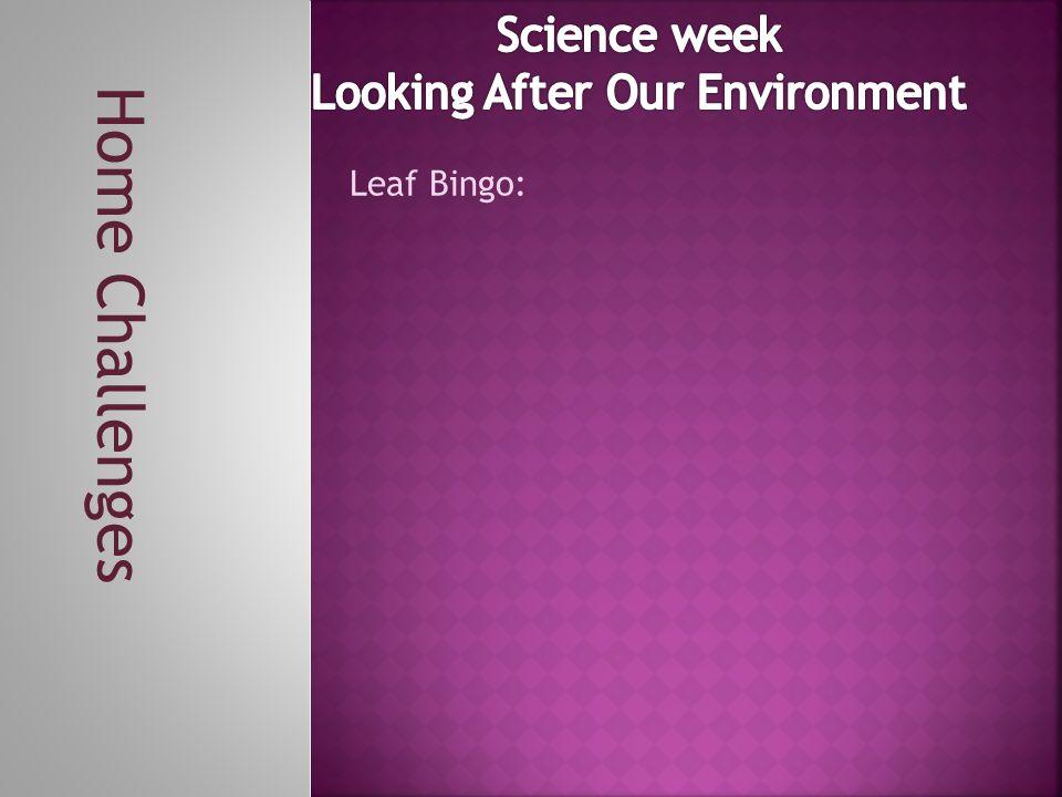 Home Challenges Leaf Bingo:
