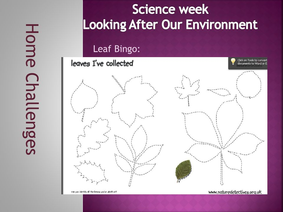 Home Challenges Leaf Bingo: