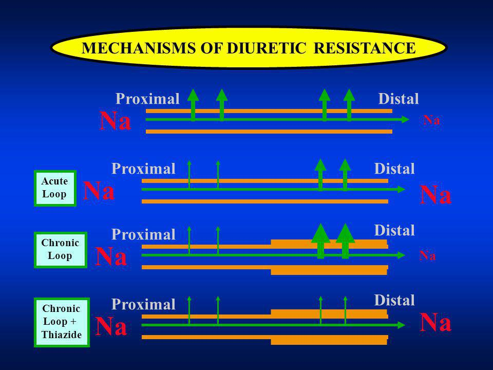 MECHANISMS OF DIURETIC RESISTANCE ProximalDistal Na ProximalDistal Na Proximal Distal Na Proximal Distal Na Acute Loop Chronic Loop Chronic Loop + Thiazide