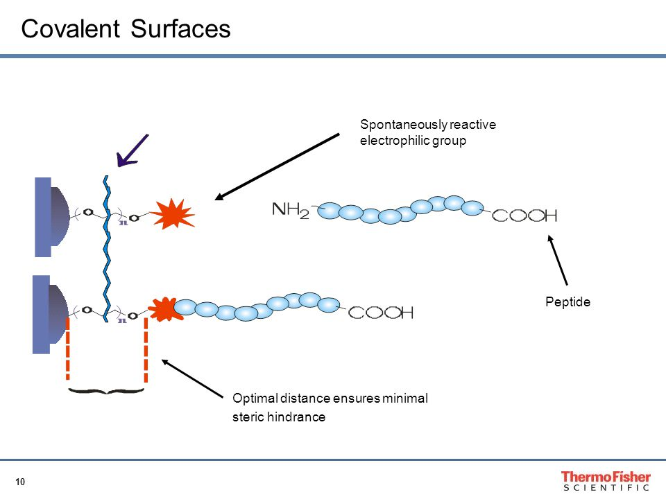 10 Covalent Surfaces Spontaneously reactive electrophilic group Peptide Optimal distance ensures minimal steric hindrance