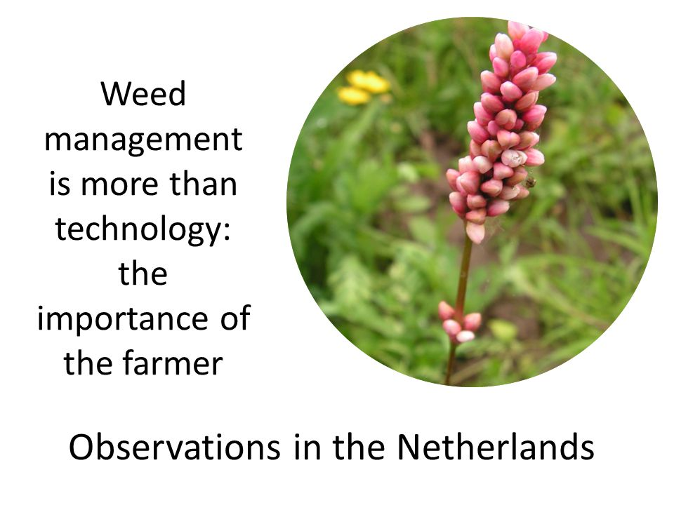 Weed management is more than technology: the importance of the farmer Observations in the Netherlands