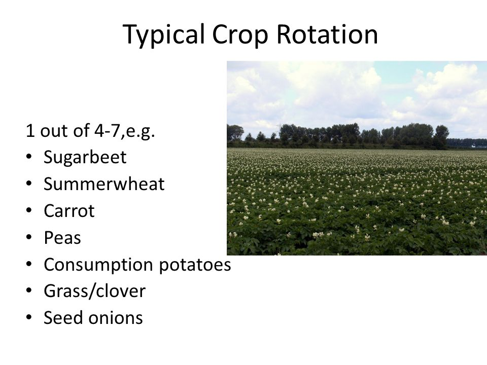 Typical Crop Rotation 1 out of 4-7,e.g.