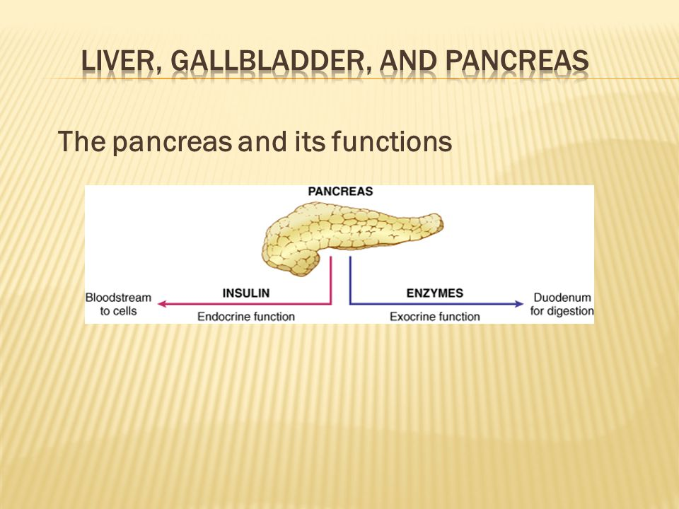 The pancreas and its functions