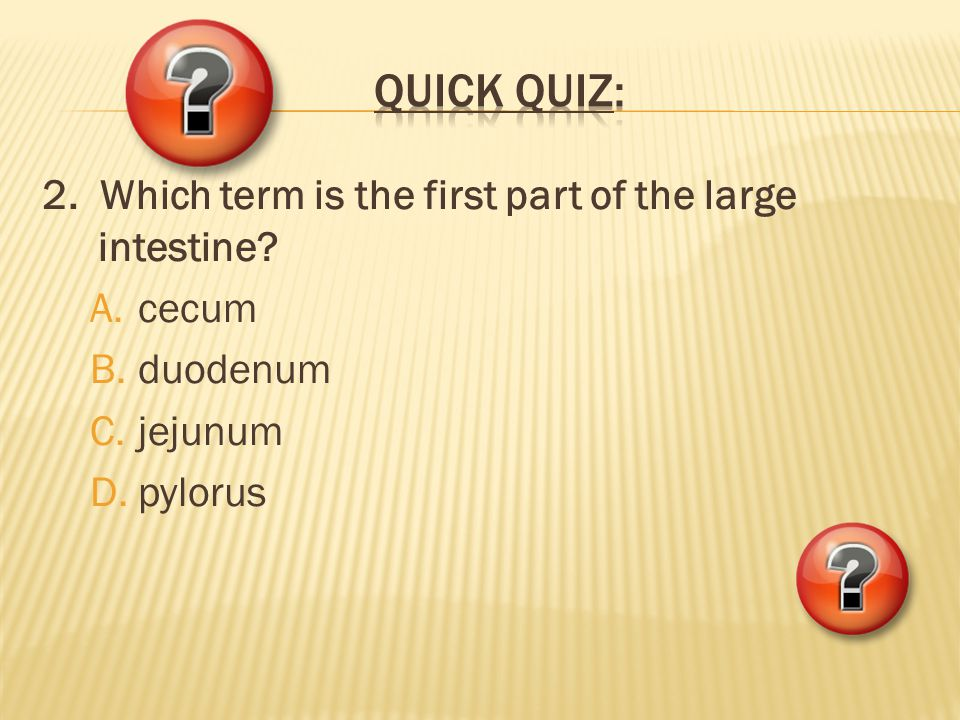 2. Which term is the first part of the large intestine? A.cecum B.duodenum C.jejunum D.pylorus